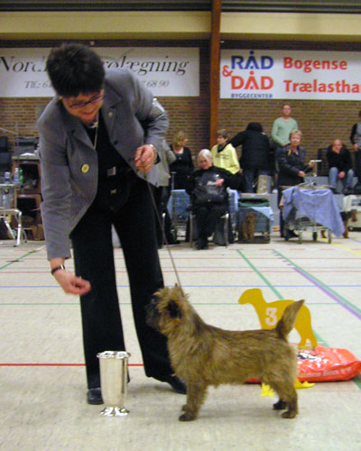 Cairn Terrier Zalazar On Parade