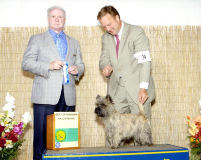 Cairn Terrier Zalazar Hold The Line
